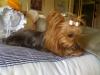 i-phone-photos-09-08-09-549